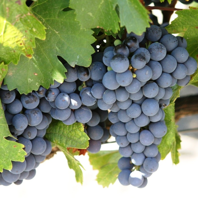 Rosie de vin Cabernet Sauvignon